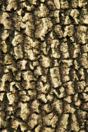 bark , from way North plant of Thailand , Stock Photo - 14915760