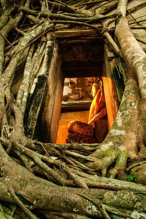tree big root covers temple Thai amazing church in Thailand Stock Photo