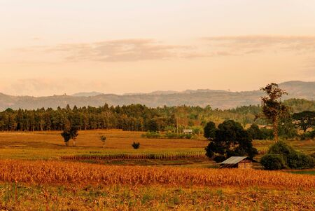 one countryside peaceful nature of Thailand