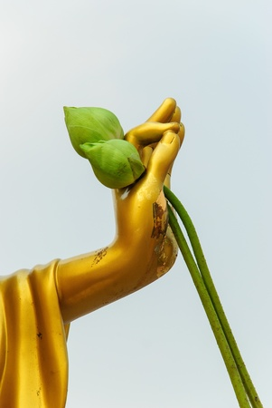 The Buddha hand and two green lotus