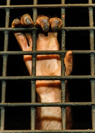 the hand of monkey with cage in the zoo photo
