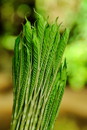 The group leaf is green fresh  of the konjac be the vegetables which is valuable for the body