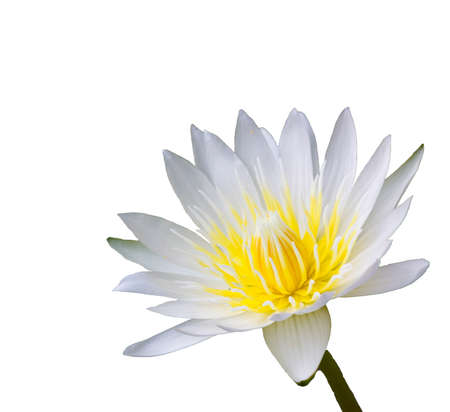 green flower: Beautiful lotus flowers in the pond Stock Photo