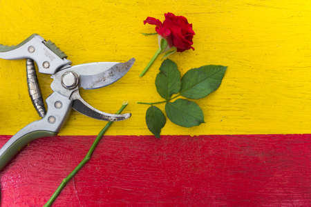 secateur: secateurs Stock Photo