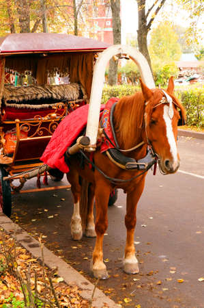 Brown horse-drawn wagon in the autumn alley photo