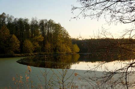 duckweed: Branch over lake with duckweed Stock Photo