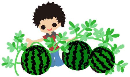cultivating: Un ni�o es el cultivo de sand�a por sus trabajos del hogar de las vacaciones de verano