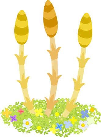 The illustration of horsetails on white background.