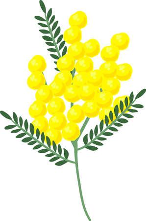 The illustration of mimosas on white background. Vettoriali