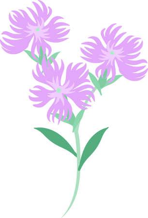 The illustration of dianthus Illustration
