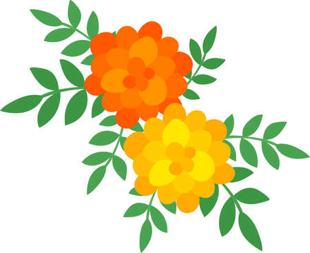 The illustration of marigold