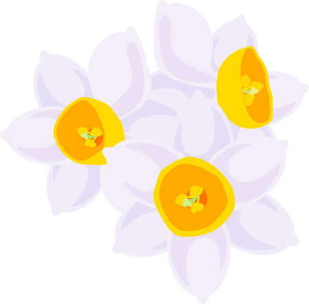 The illustration of pretty narcissus