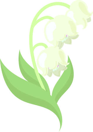 The illustration of pretty lilies of the valley