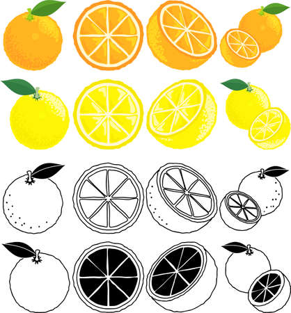 The cute icons of orange and grapefruit