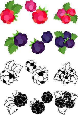 The cute icons of raspberry and blackberry  イラスト・ベクター素材