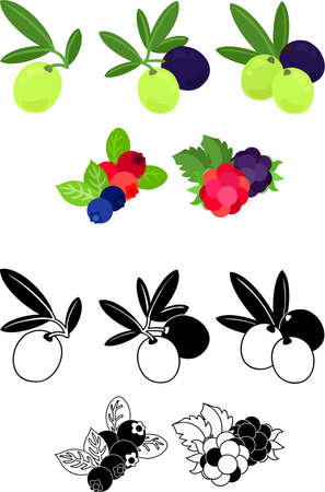 The cute icons of olive and blueberry and cranberry and raspberry and blackberry