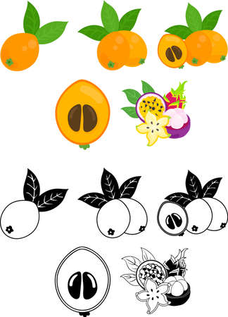 The cute icons of loquat and tropical fruits