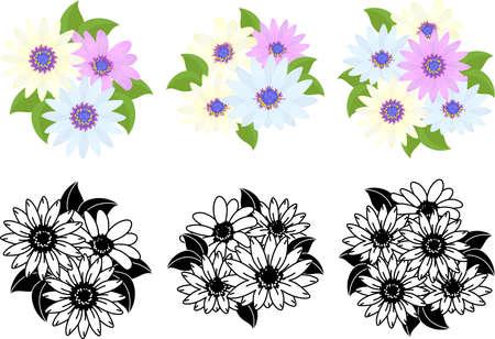 The cute icons of Osteospermum