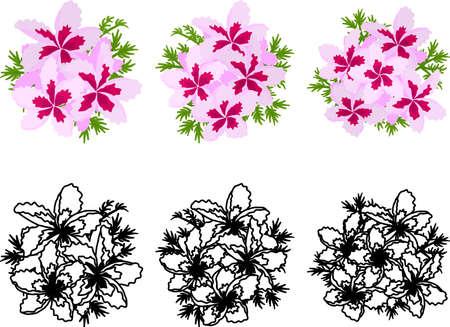 The cute icons of pelargonium
