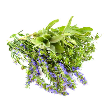 hyssop: Thyme, hyssop and sage herbs isolated on white background