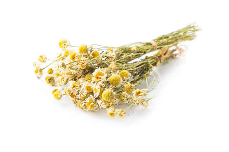 treating: Dried camomile isolated on white