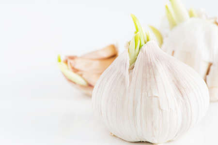 Garlic clove with green sprouts growing photo