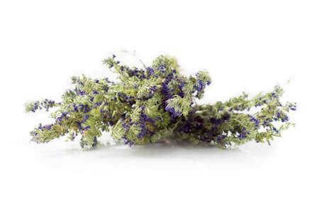 hyssop: Twig of dried hyssop isolated