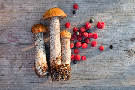 cepe: Fresh orange-cap boletus, raspberries and blueberries, top view Stock Photo