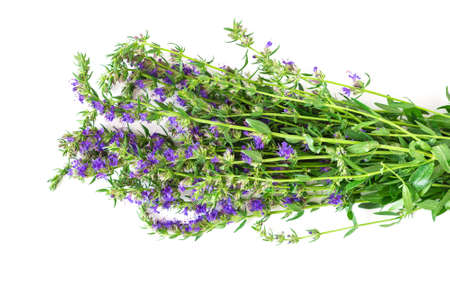hyssop: Fresh hyssop isolated on white, top view Stock Photo