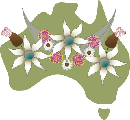 gum: Map of Australian with native flowers - gum leaves, gum blossoms, flannel flowers