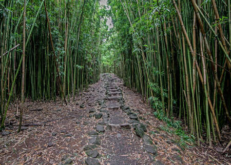 stone path: Stone path in the bamboo forest along the Pipiwai Trail in Haleakala National Park