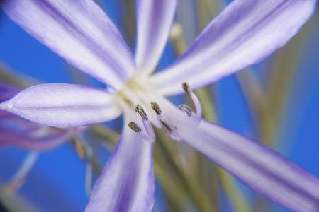 Purple flower Stock Photo - 566721