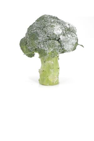 Frozen brocoli Stock Photo - 566723