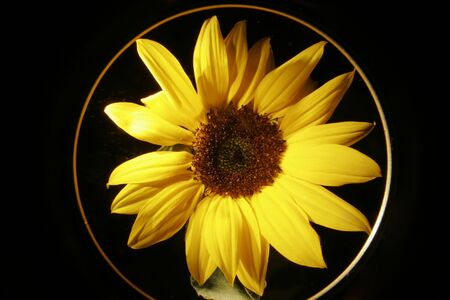 Sunflower Stock Photo - 589491