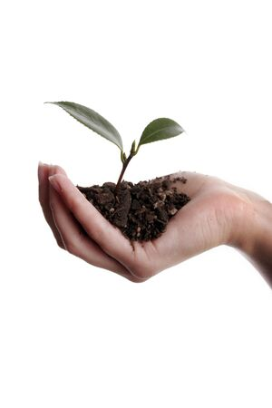 Seedling and soil held in hand isolated on white background Stock Photo