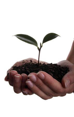 Seedling and soil held in hands isolated on white background Stock Photo - 884605