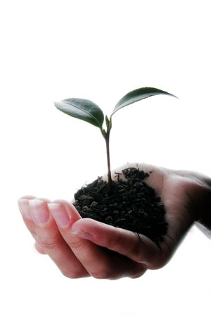 Seedling and soil held in hands isolated on white background