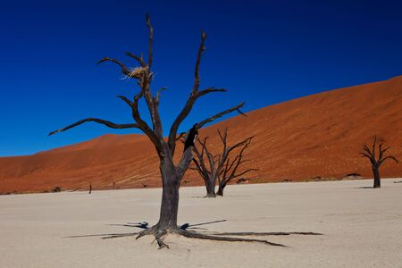 Dead tree in the middle of red sand desert photo