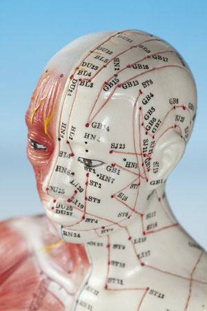 Close up of medical dummy Stock Photo
