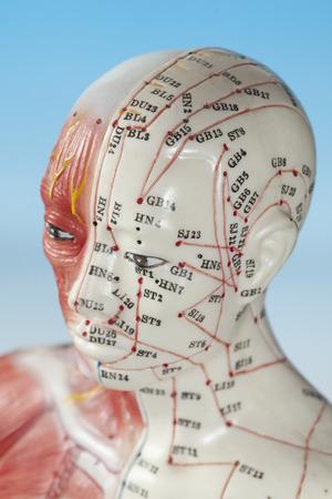 Close up of medical dummy Stock Photo