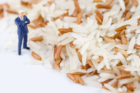 miniature businessman standing on the rice seed photo