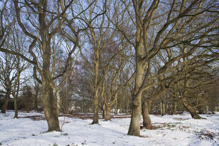 Winter landscape of dormant trees in the snow Stock Photo - 12828381