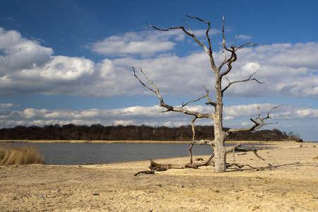 Dead tree on Benacre Beach in Suffolk Stock Photo