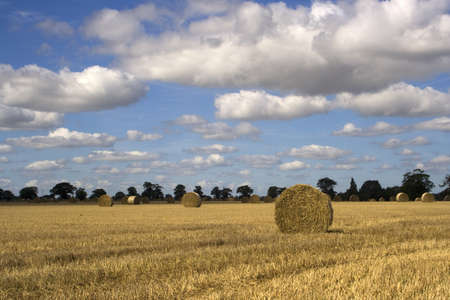Straw bales in Suffolk, against a background of trees and fluffy white clouds Stock Photo