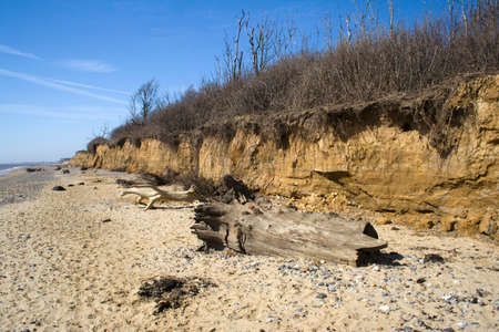 Dead trees trunks on Benacre Beach, Suffolk, England Stock Photo