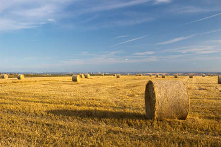 Harvest at Hadleigh, Essex, England Stock Photo