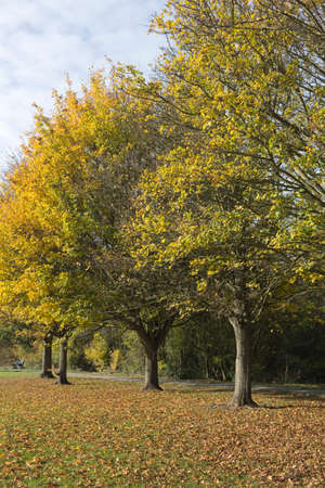 Colourful autumn trees in Wickford Memorial Park, Essex, England
