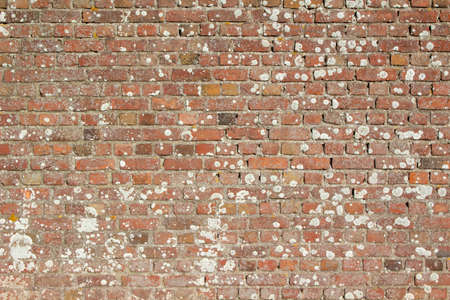Close-up image of a brick wall