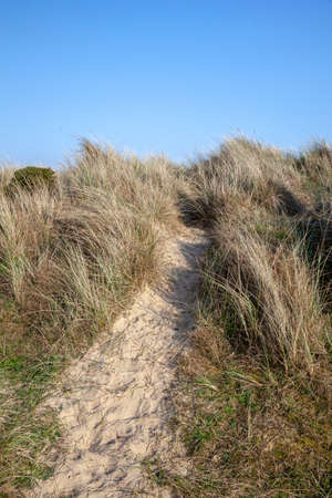 Footpath through the grasses on Walberswick beach, Suffolk, England, with space for text
