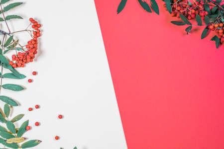 Aurumn rowan branch and berries. Ripe red rowan. Colored paper with the berries of a Rowan tree. Stock fotó